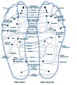 Carte des pieds en réflexologie plantaire